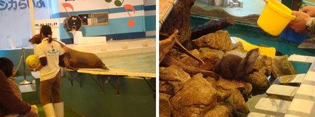 yashima aquarium takamatsu 04