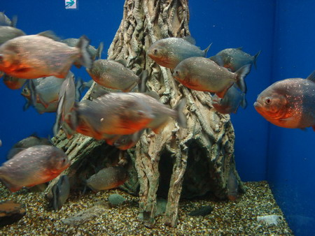 yashima aquarium takamatsu 06
