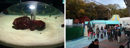 yashima aquarium takamatsu 08