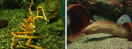 yashima aquarium takamatsu 09