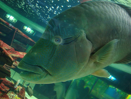 yashima aquarium takamatsu 10