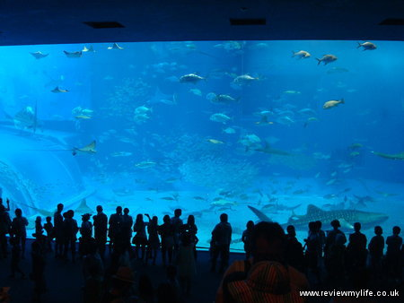 naha churaumi aquarium 12